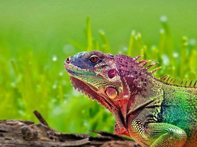 Reptiles.